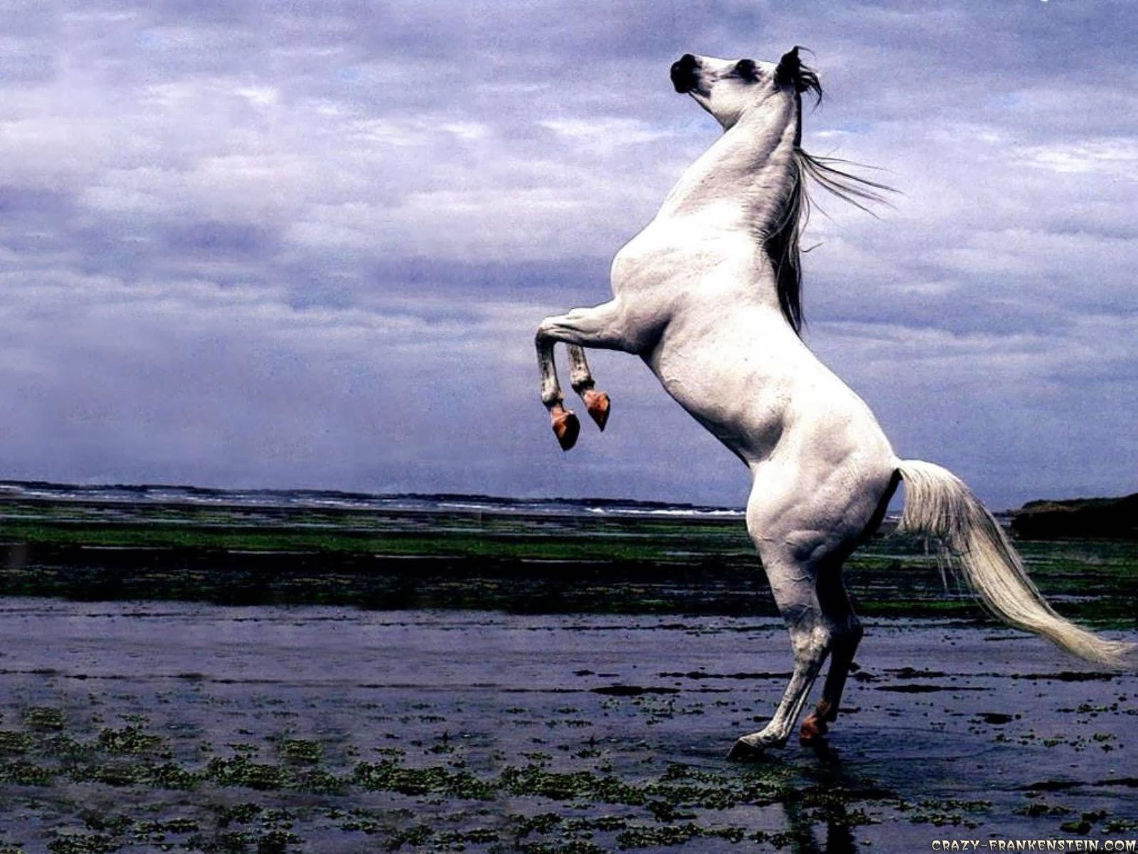 Most Inspiring   Wallpaper Horse Summer - Beautiful+Animal+Horse+Wallpapers+HD  Gallery_974451.jpg