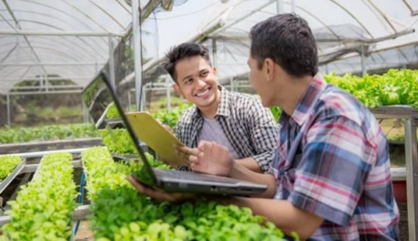 Saat Kebun dan Sawah Menunggu Petani Muda Turun Tangan