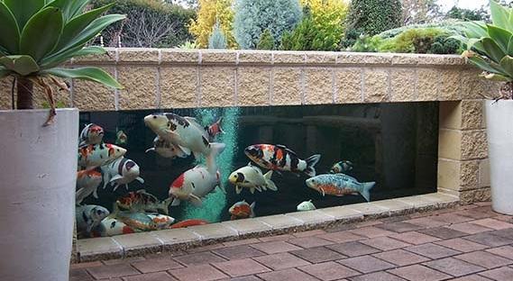 Kolam Ikan Koi Minimalis - Budidaya Ikan