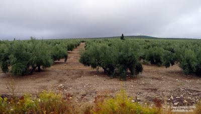 grandes-rutas-cazorla-ubeda-eldeladahon.net