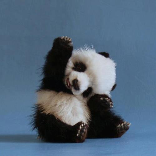 pandás szülinapi képeslap ღ Edyt kreativ szigete ღ: ÁLLATOK VILÁGNAPJA pandás szülinapi képeslap