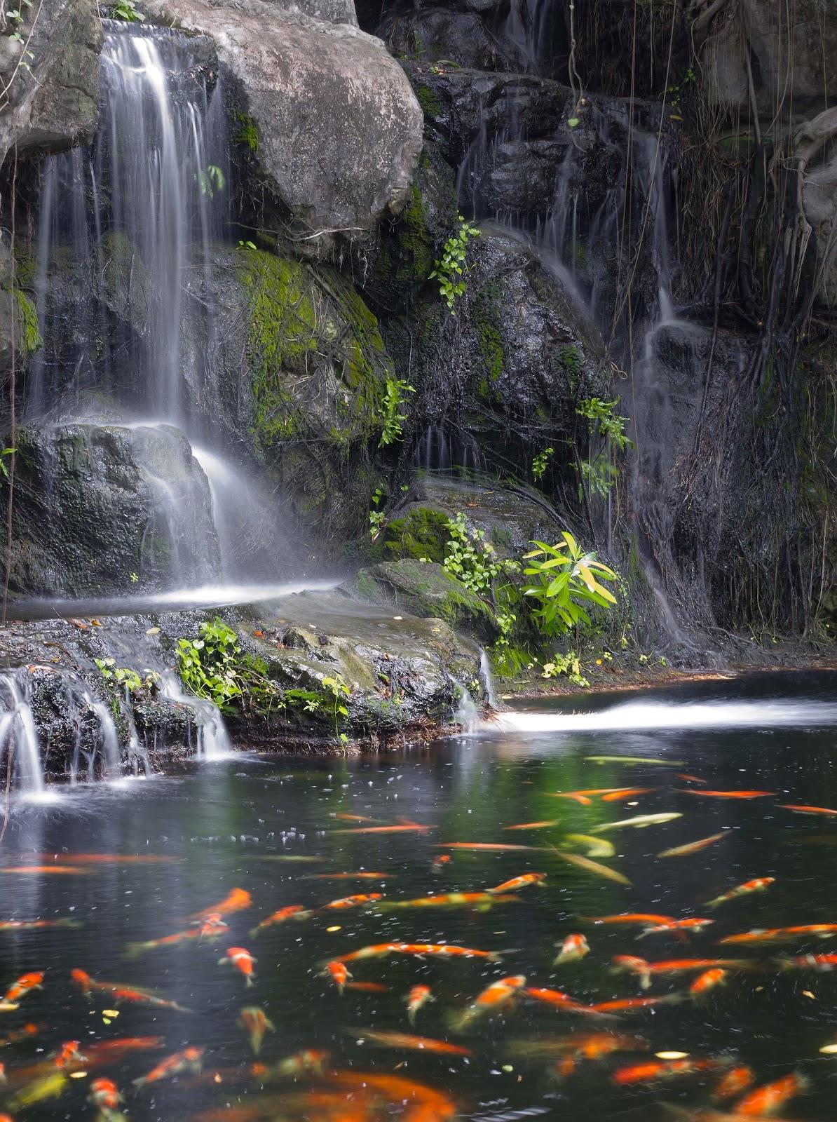 Beautiful natural hd wallpapers allfreshwallpaper for Koi waterfall