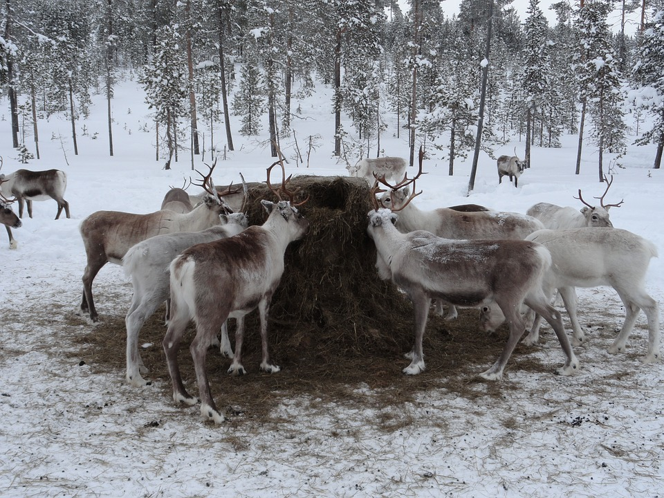5 Exciting Reasons To Take A Family Winter Holiday To Lapland