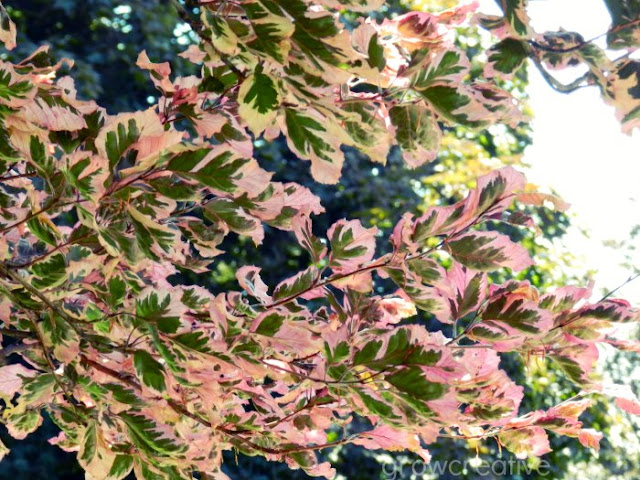 pink and green leaves in logan utah: grow creative blog