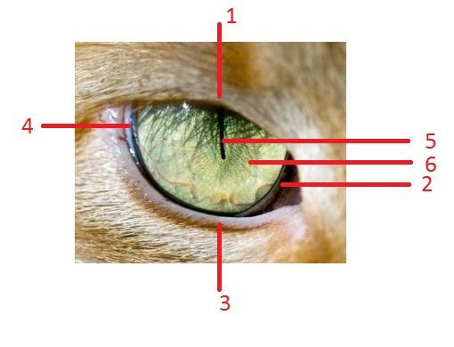 Fakta Mata Kucing