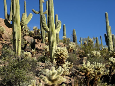 Tanaman Kaktus dapat menarik energi rejeki
