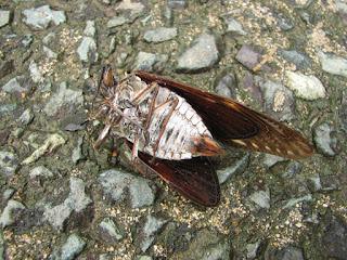 死にかけの蝉