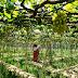 How to Explore the Unique Wine Culture of Central Vietnam