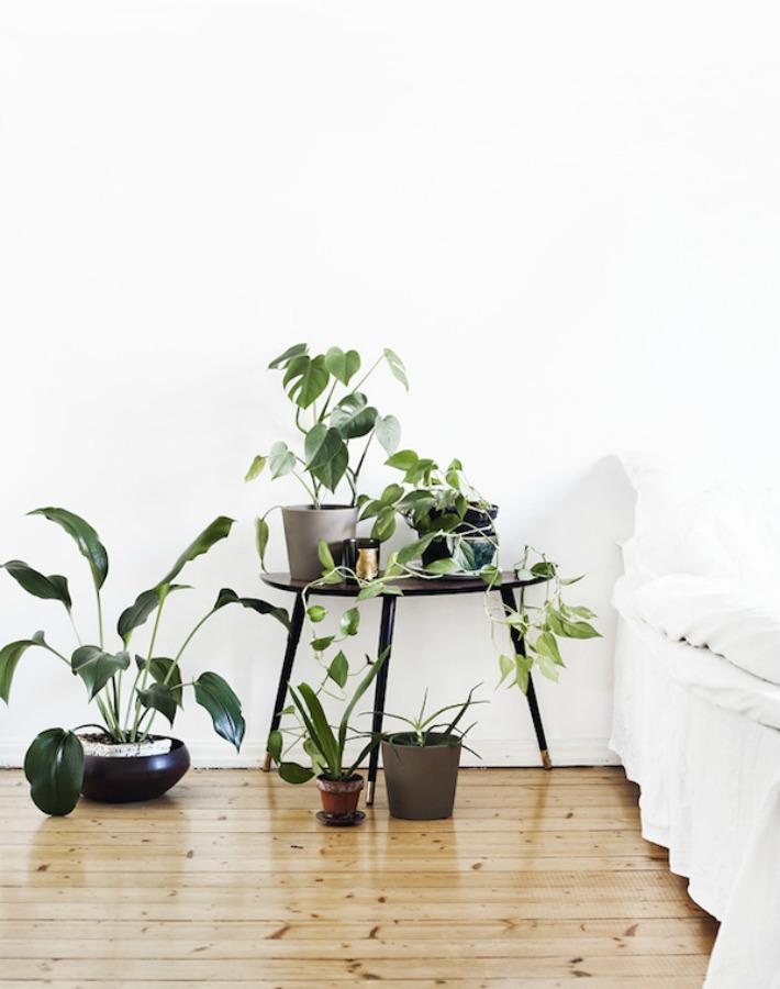 ¿Por qué se ha muerto mi planta?