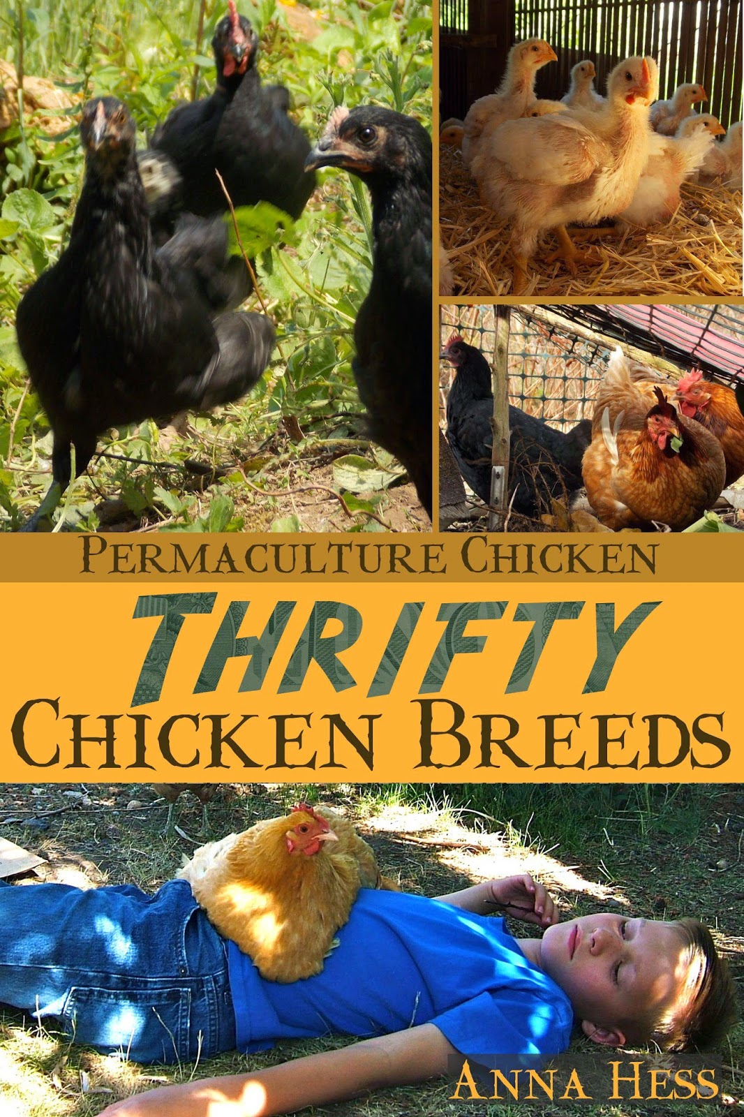 the homestead laboratory book review thrifty chicken