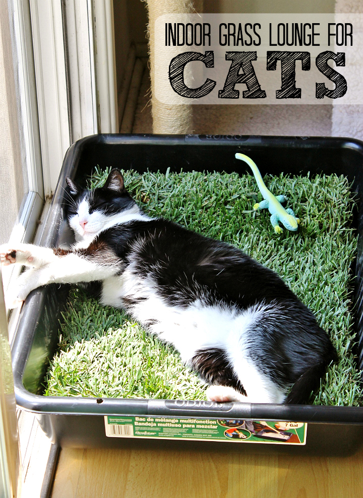 Build a grass lounge for your indoor cats for under $10- pick up a plot of sod at your local hardware/gardening store. #PurinaMysteries #AD