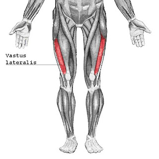 vastus lateralis muscle, action, muscle picture