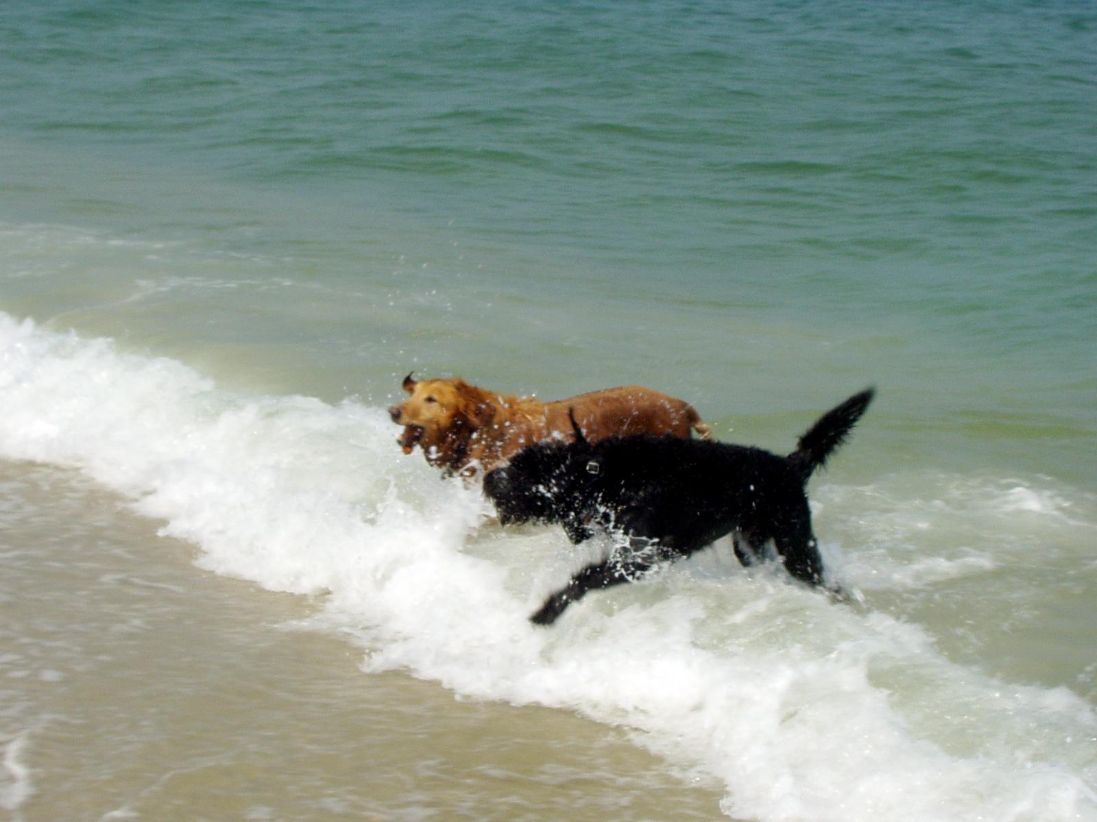hikewithyourdog: Island Beach State Park