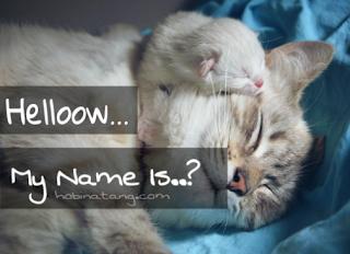Nama Untuk Kucing Laki Laki dan Perempuan yang Bagus
