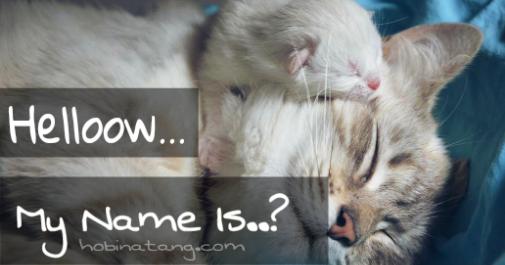 Nama Kucing Dalam Bahasa Korea Dan Artinya 81021 Nama Untuk Kucing Comel Lucu Dan Unik