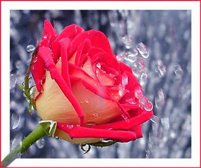 Εύα τριαντάφυλλο πορνό βίντεο pron