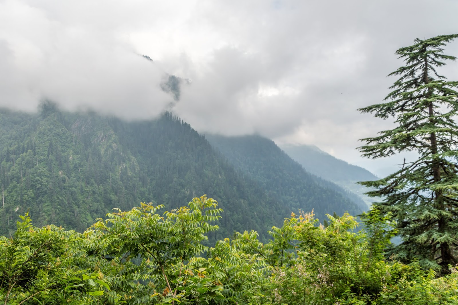 Lush green forests and clouds around the peak mystic view during Srikhand mahadev Yatra