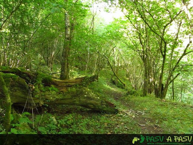 Bosque en el Monte Pindo.