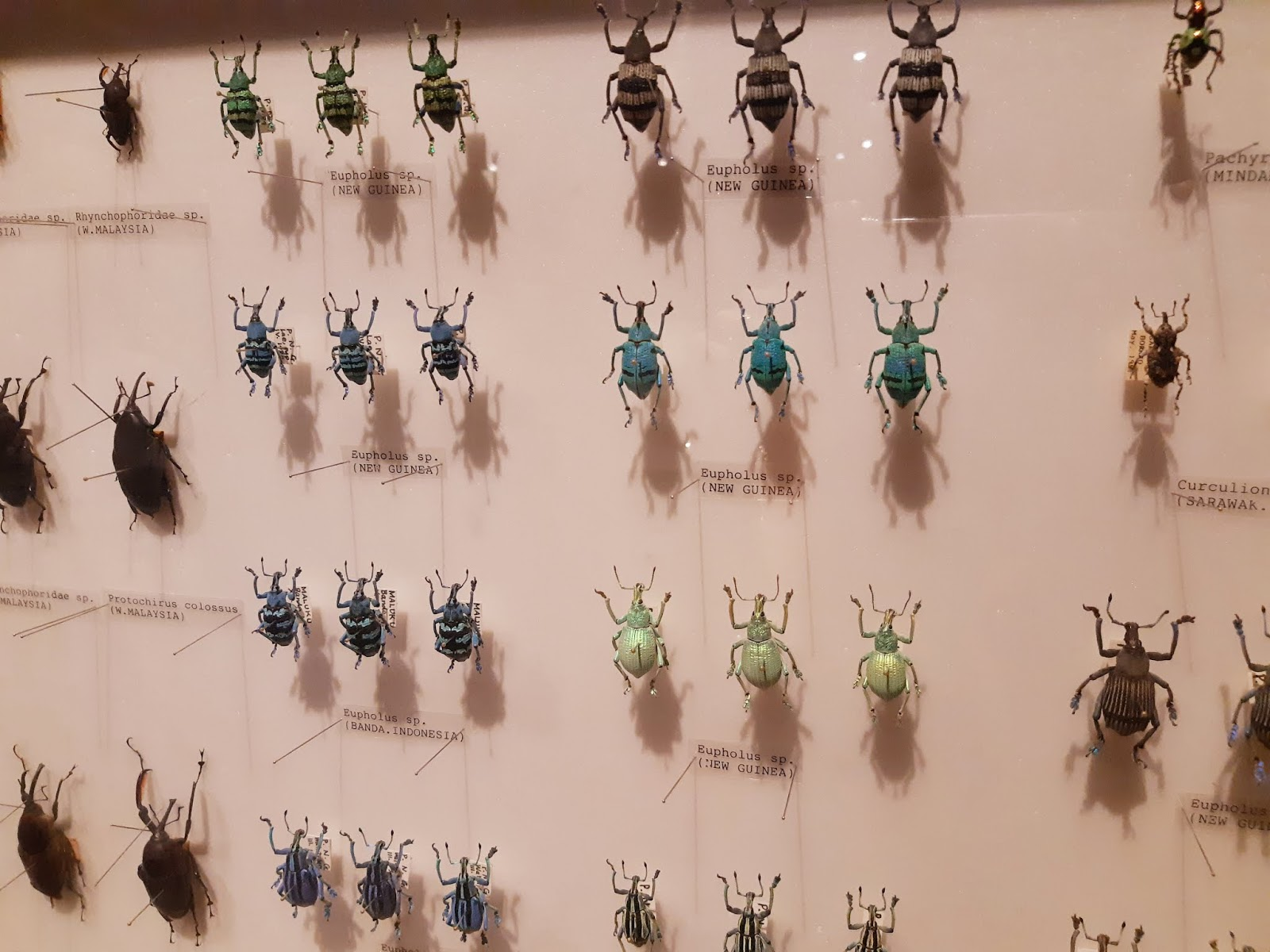 Thearcticstars Tales Media Invite Review On Butterfly Park Tiket Insect Kingdom Moving There Is Also A Stunning Display Of Beetles Preserved And Made Into Art Pieces Around The Museum Within Itself