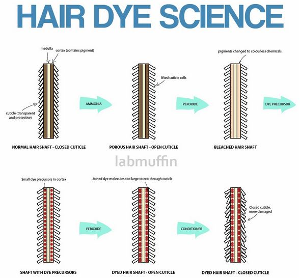 How Hair Coloring Works