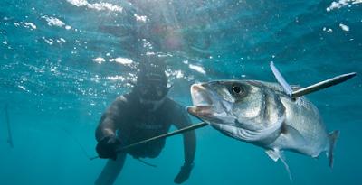 dicas-cacasubmarina | pesca Submarina