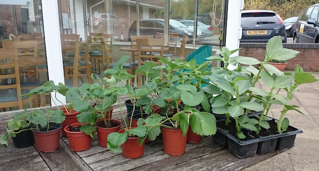 Pcpgarden, Plants for sale, Pioneering Care Centre,