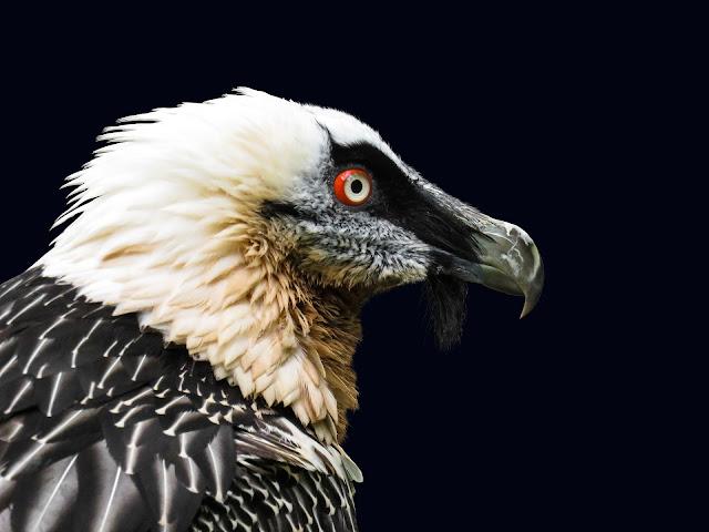 most-dangerous-bird,most-dangerous-bird,dangerous-birds