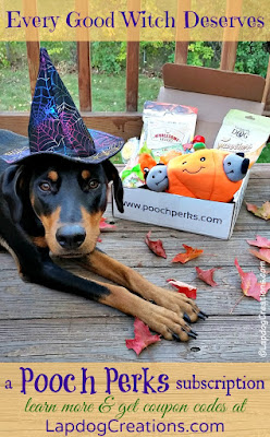 doberman mix dog dressed up for Halloween