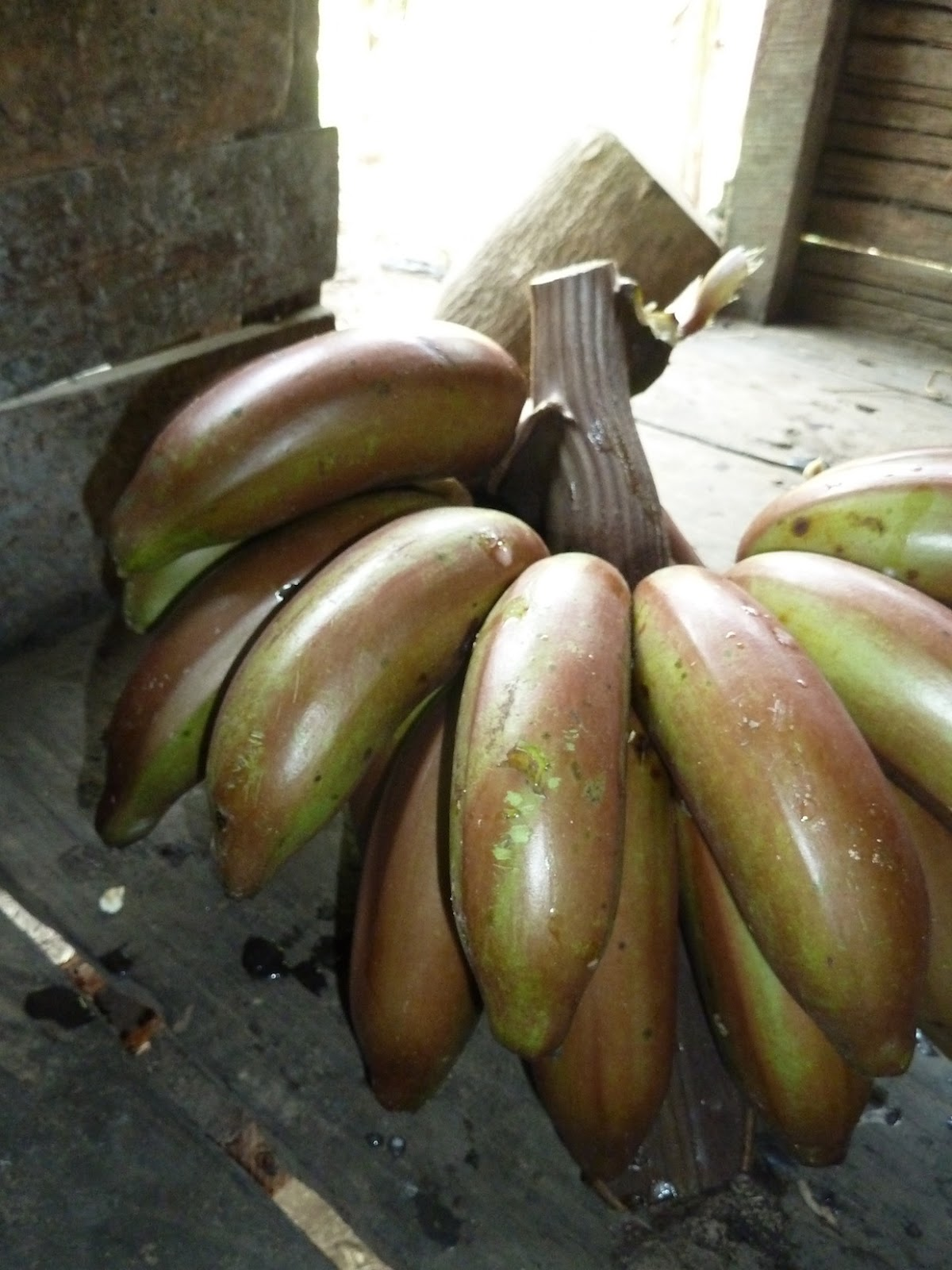 What Are Banana Plant Pups How To Separate Banana Tree: Farms Forests Foods: December 2012