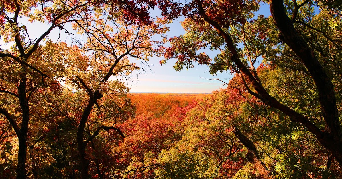 Colorful Fall Scene Wallpaper Dallas Trinity Trails Fall Red Woods Of The Great Trinity