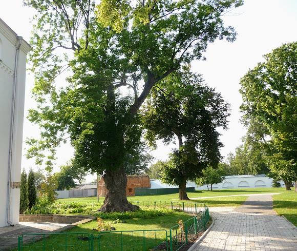 Чернигов. Елецкий Успенский монастырь