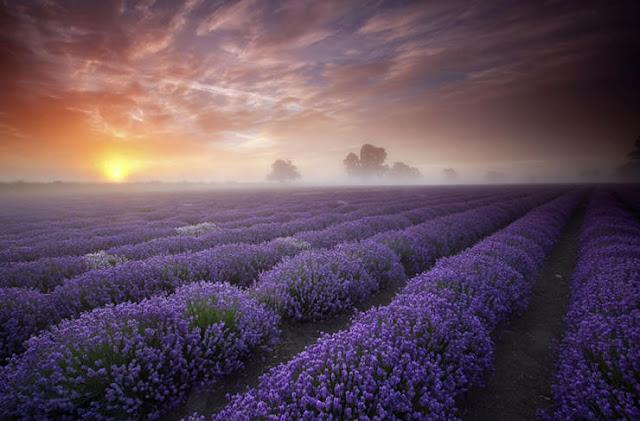 Provence, Prancis