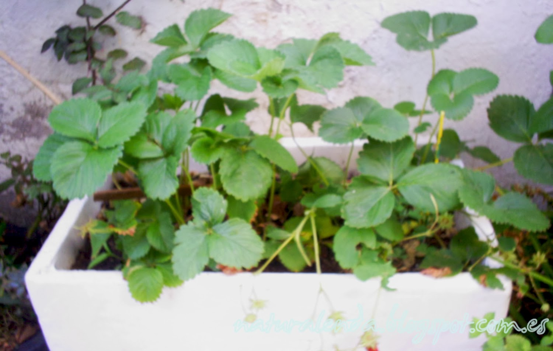 jardinera de porexpan con fresales