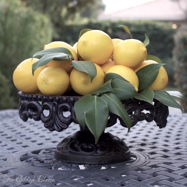 Meyer Lemons- www.gildedbloom.com