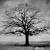 बैर के पैड का भयानक रहस्य - Ghost On Tree - A Fiction Horror Story