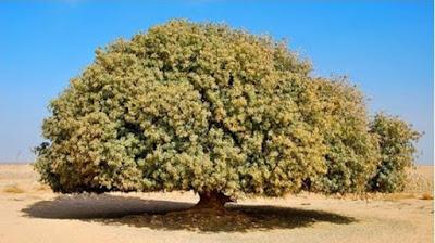 http://filesmoslem.blogspot.co.id/2016/04/panjang-umur-pohon-yang-menaungi.html