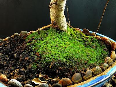 zielony mech