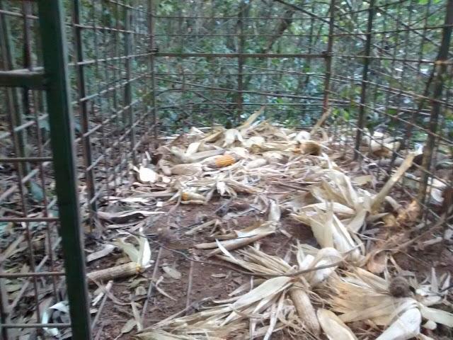Guarda Civil encontra armadilhas em floresta estadual de Rio Claro