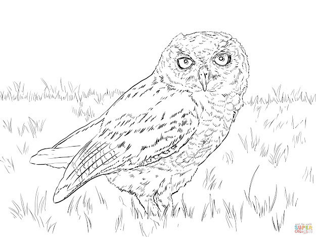 Click The Western Screech Owl Coloring Pages To View Printable Version Or  Color It Online Patible With Ipad And Android Tablets