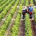 Πρόγραμμα βελτίωσης της ανταγωνιστικότητας γεωργικών εκμεταλλεύσεων