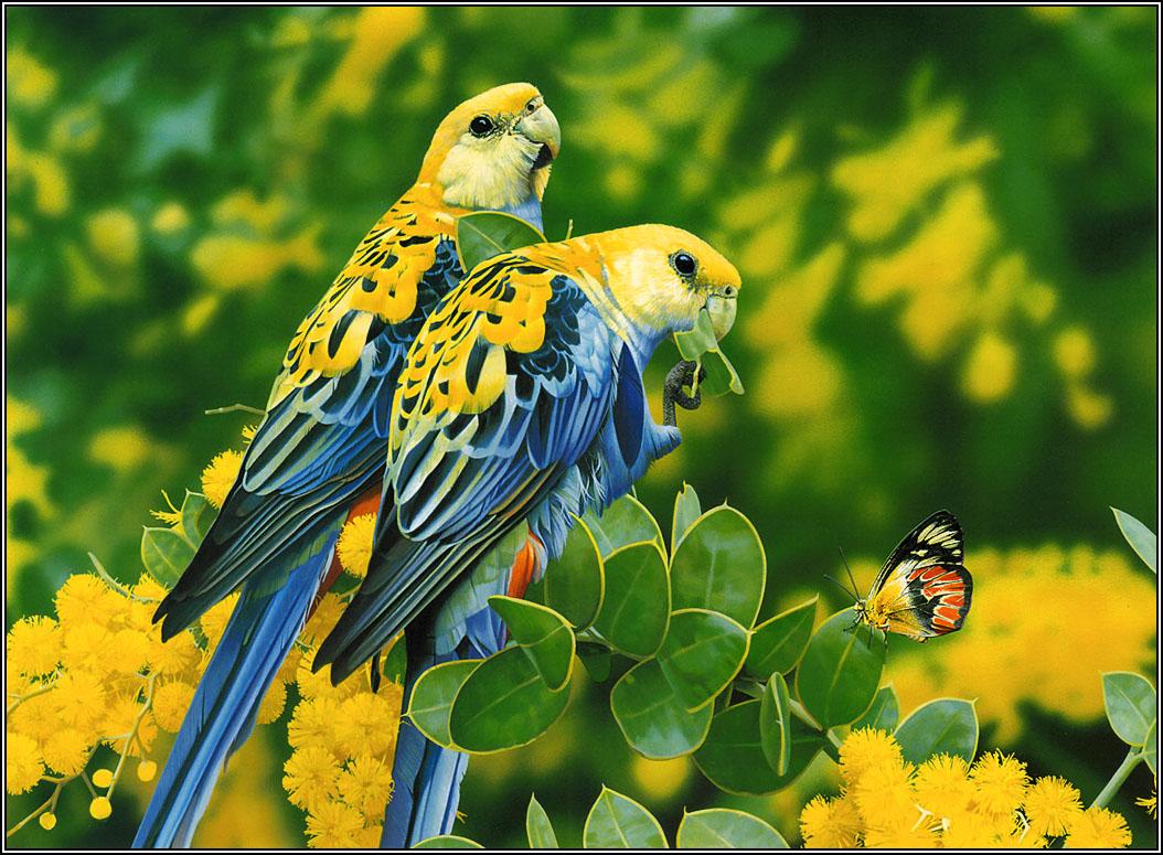 15 Beautiful Birds Latest Hd Wallpapers 2013