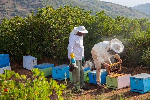 Μέχρι 20 Ιανουαρίου οι αιτήσεις μελισσοκόμων για αντικατάσταση κυψελών και μετακινήσεις μελισσοσμηνών