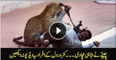 world, Leopards Entered in Indian School, indian leopards in school, indian leopards, leopards, leopards in school,