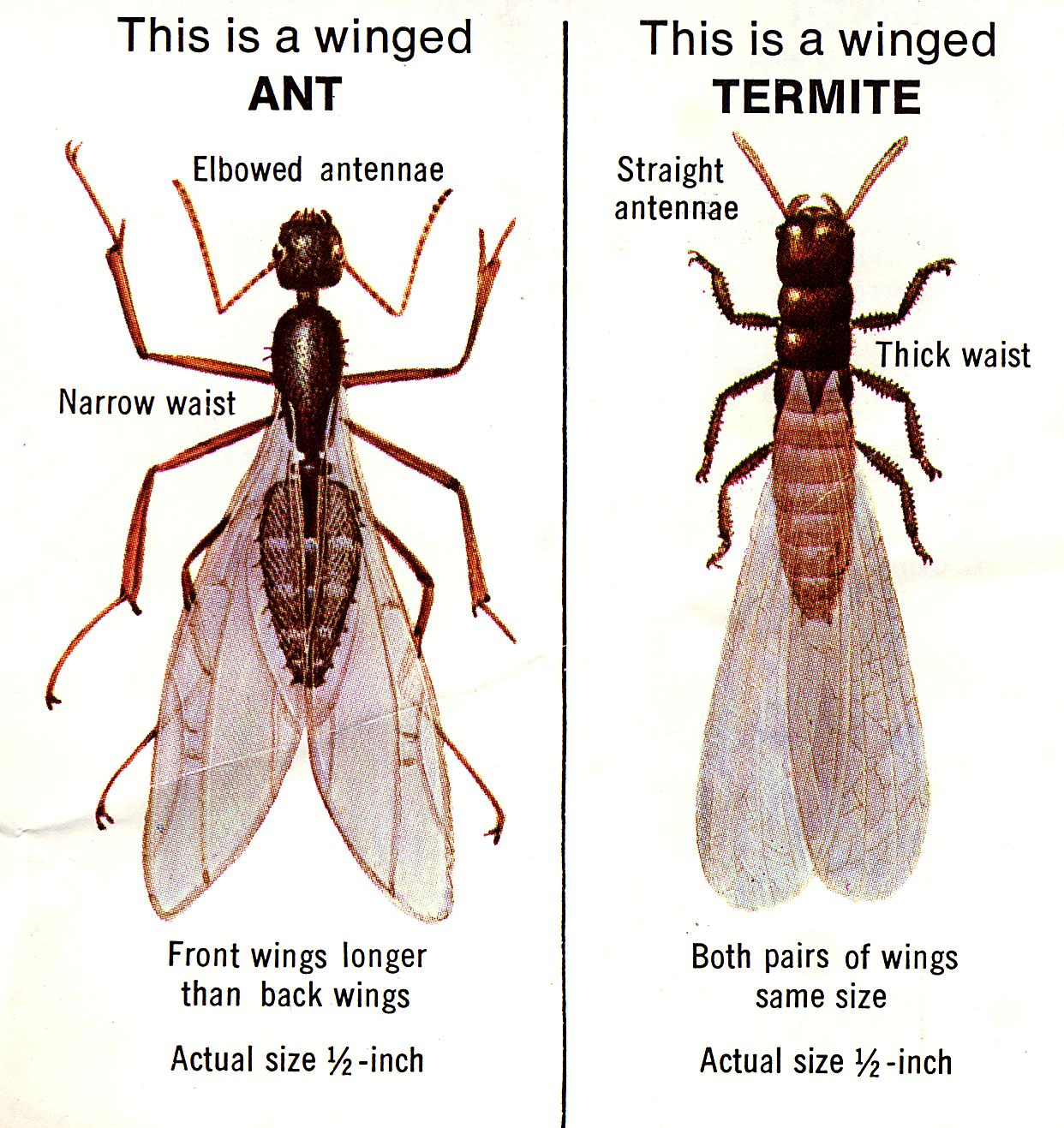 How Do Termites Get Their Food