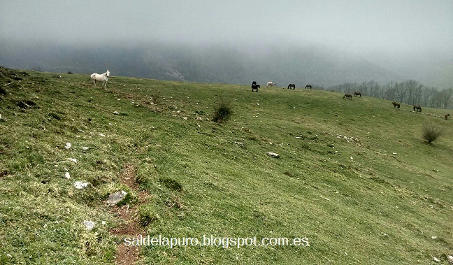caballos-montes-asturianos