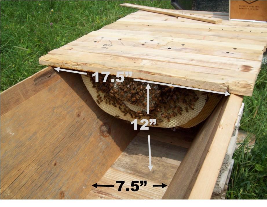 Reflexiones Sobre la Construcción de una Colmena Marimba