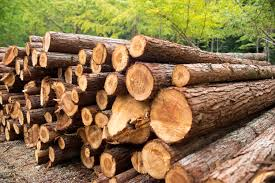 Timber depots In Tirupati