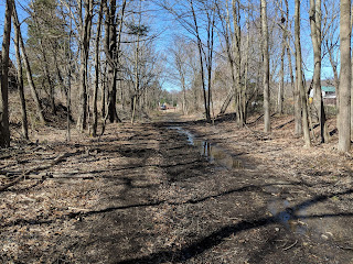 the trail with bare trees