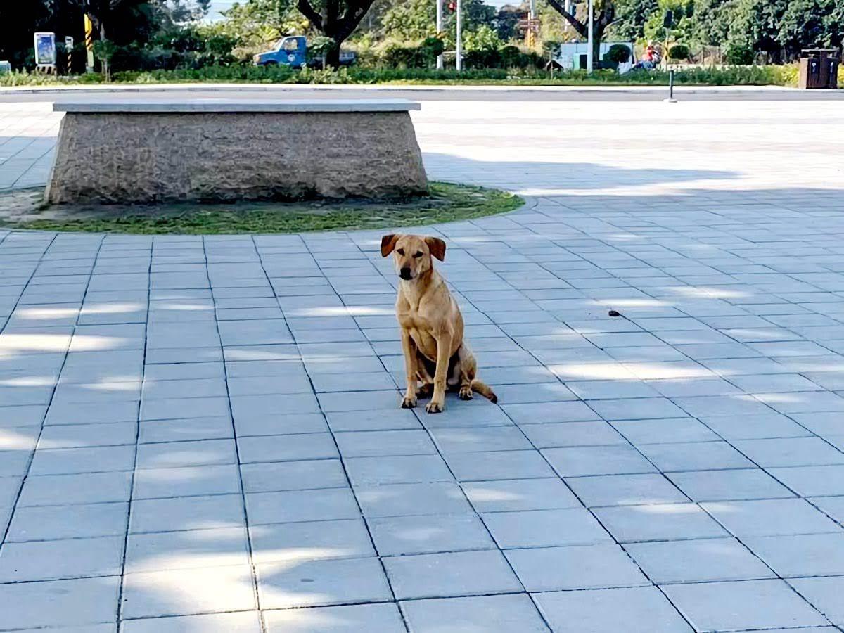 網友一面倒支持狗狗|台南山上花園水道博物館確定收編小黃