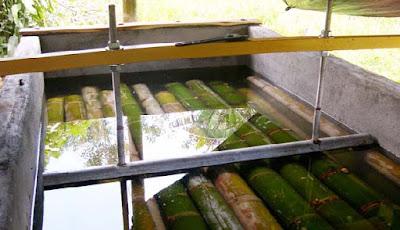Cara Mengawetkan Bambu dengan Bahan Alami